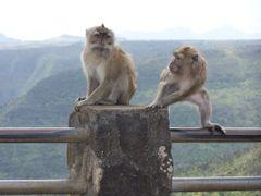 monos en el mirador de las goges by <b>LEIRE13</b> ( a Panoramio image )