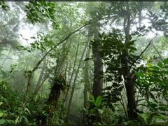 Borneo, Mulu, Rainforest by <b>GallienF</b> ( a Panoramio image )