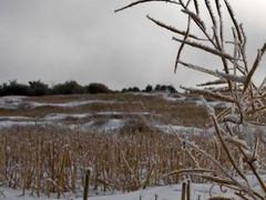 Frozen Canola by <b>Bruce A. Johnson NUT</b> ( a Panoramio image )