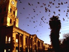 Birds and Church by <b>Gui Torres</b> ( a Panoramio image )
