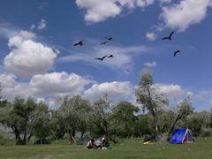 Black-eared Kites at Bulgan Gol by <b>LeBoque</b> ( a Panoramio image )