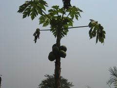 albero di ? by <b>katia spanu</b> ( a Panoramio image )