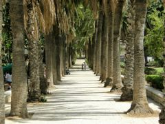 Пальмовые колонны в центральном парке Ришона. by <b>valerasu</b> ( a Panoramio image )