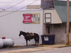 Horse at the Pub by <b>jb.fonzie</b> ( a Panoramio image )