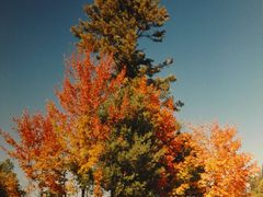 "Quebec""s indian summer. by <b>Natmara</b> ( a Panoramio image )"