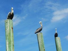 Three Amigos by <b>livingworld</b> ( a Panoramio image )