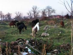 Horse near Nisava by <b>dragansremac</b> ( a Panoramio image )