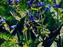 цветущее разнотравье в Сарычелекском заповеднике by <b>Sergey Bulanov</b> ( a Panoramio image )