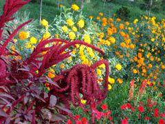 Samarqand Park flowers 2007 by <b>emkaplin</b> ( a Panoramio image )