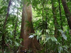 Tapang giant by <b>Wakx</b> ( a Panoramio image )