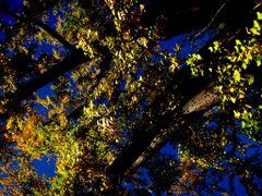 Whitehouse Ginko Biloba by <b>Michele - mik</b> ( a Panoramio image )