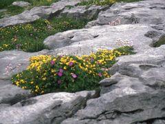 irland...burren-region...kalkstein by <b>f.h ehrenberger germany</b> ( a Panoramio image )