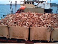Snow Crab on Bjal Senior, with skipper behind by <b>arbuh</b> ( a Panoramio image )