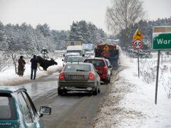 Uwaga dzikie zwierz?ta! ?o? cz. 1 / Beware of wild animals... in by <b>Hiup (Hubert)</b> ( a Panoramio image )