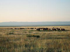 mongolian grassland by <b>michpol</b> ( a Panoramio image )