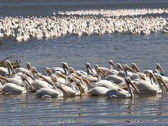 Cojumatlan Michoacan, Pelicanos Borregones by <b>salcampos3301</b> ( a Panoramio image )