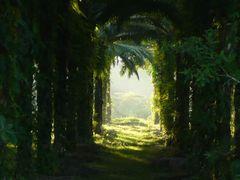 Plantacion de palma aceitera (Elaeis guineensis) en Chacarita (c by <b>erojascabezas</b> ( a Panoramio image )