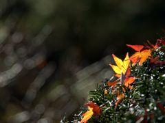 leaf...shinning by <b>amitani</b> ( a Panoramio image )