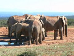 Elephant Conference! by <b>H.J. van Zyl</b> ( a Panoramio image )