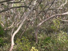 Mangrove Wetlands, Nudgee Beach by <b>Peacebuilders International</b> ( a Panoramio image )