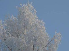 winter by <b>tahkapippi</b> ( a Panoramio image )