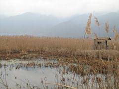 Monospitovo Swamp (Моноспитовско Блато) by <b>bileveljo</b> ( a Panoramio image )