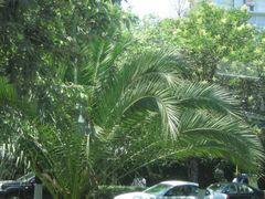 Palmeras en Ave Palmas Mexico DF by <b>~??V?NT?~</b> ( a Panoramio image )