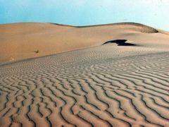 Каракумские пески в Репетекском заповеднике by <b>Sergey Bulanov</b> ( a Panoramio image )