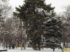 big pine by <b>Rumlin</b> ( a Panoramio image )