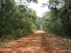 Traversee de la foret de Ngoto by <b>courtoism</b> ( a Panoramio image )