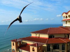 "Seagull from Elenite (""Waiting for the summer"") by <b>Maciejk</b> ( a Panoramio image )"