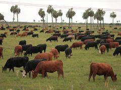 Vacas Vacas Vacas... by <b>-Arcama-</b> ( a Panoramio image )