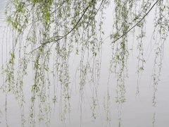 On Lijiang River - Tren Dong Le Giang - photo by Hoang Khai Nhan by <b>Hoang Khai Nhan</b> ( a Panoramio image )