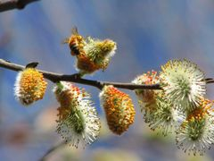 Spring Interactions by <b>seventhheaven</b> ( a Panoramio image )