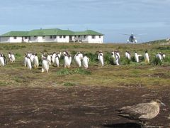 Sea lion lodge with Gentoo penguins and young Caracara by <b>Graham Till</b> ( a Panoramio image )