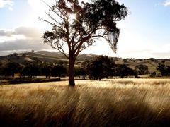 Tarrleah Drive by <b>weaving.peter</b> ( a Panoramio image )