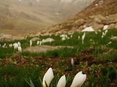 Dozarei by <b>Iman Rezaei</b> ( a Panoramio image )