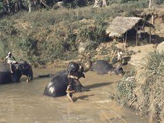 Kandy in 1976 - working elephants, daily bath in the Mahaweli Ri by <b>Andreas Czieborowski</b> ( a Panoramio image )