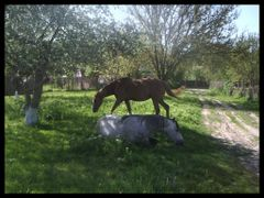 Horse by <b>Lutkov</b> ( a Panoramio image )
