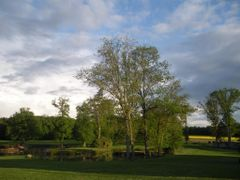 Evening light and a line of yellow rape celebrate the day by <b>ekkykmanet</b> ( a Panoramio image )