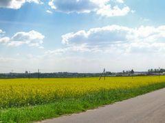Rape Field Near Miensk by <b>Andrej Kuzniecyk</b> ( a Panoramio image )