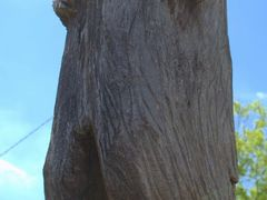 Little Rock Zoo - Carved Bear by <b>Brooks Family</b> ( a Panoramio image )