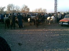 Cattle bazaar in ortasaray by <b>parman-82@mail.ru</b> ( a Panoramio image )