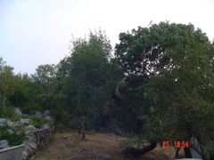 Montpellier Maples in Lukovo by <b>Montenegrin77</b> ( a Panoramio image )