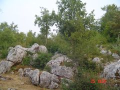 Ash and Hornbeam trees surrounding rocks in Lukovo by <b>Montenegrin77</b> ( a Panoramio image )