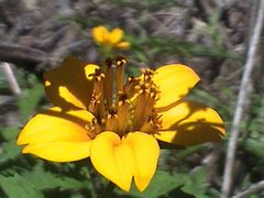 Flor by <b>orestesgf@hotmail.com</b> ( a Panoramio image )