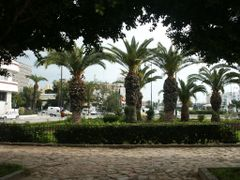 Tunis/Tunisia - Palms near Place 7 Novembre by <b>Barni</b> ( a Panoramio image )