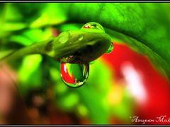 Droplet!!! ©Anupam by <b>Anupam Mukherjee</b> ( a Panoramio image )