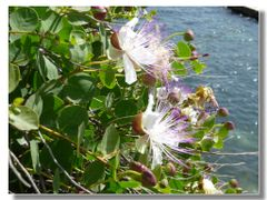 timidi fiori by <b>Rafl</b> ( a Panoramio image )