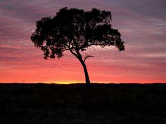Sunrise on a cold winter morning near Glen Innes, New England, N by <b>Ian Stehbens</b> ( a Panoramio image )